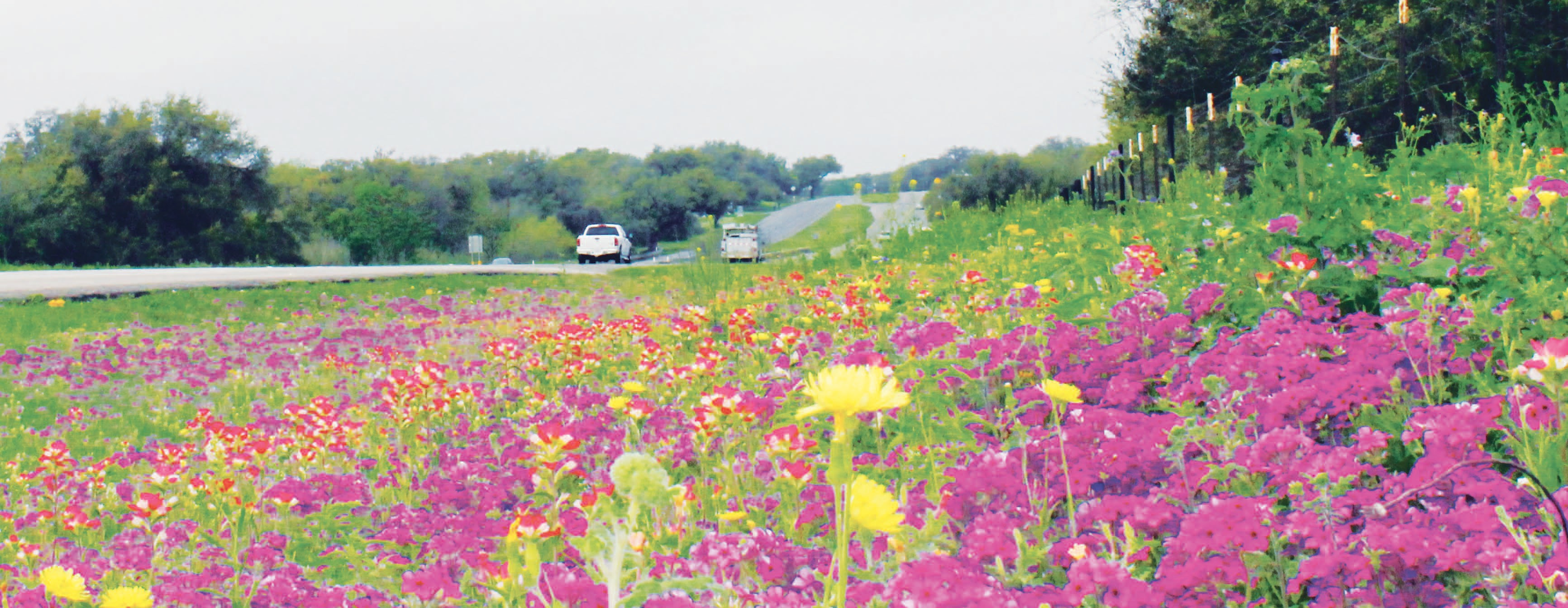 This assortment of wildflowers - phlox, Indian paintbrush and dandelions are plentiful this spring, which officially began on Tuesday, March 20. You can see these on Hwy. 97 E, outside of Pleasanton.