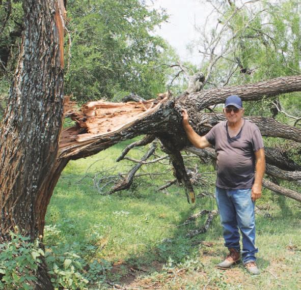 Tree damage at Frank Laskowski home at 55 Kyote Road northeast of Kyote.