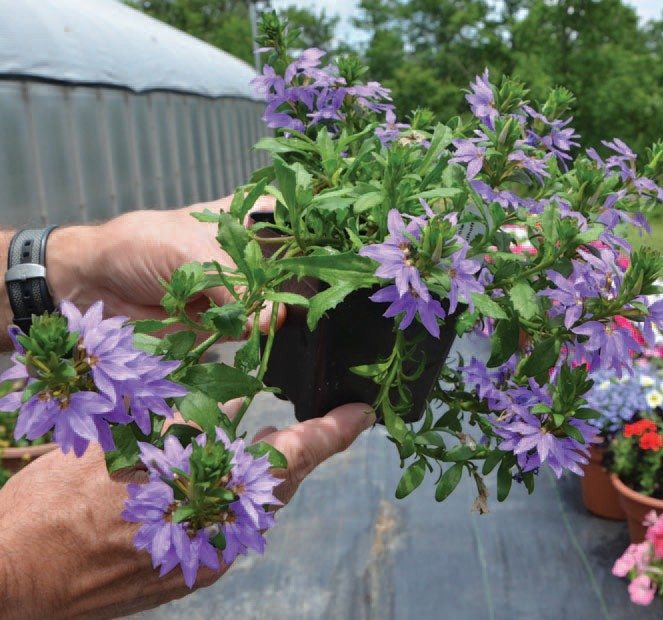 Landscaping with Texas Superstar plants will be the focus of a Backyard Gardening program to be held July 30 in San Antonio