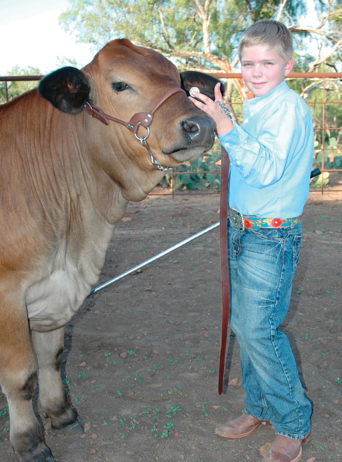 """Derek Scharmann and his Simbrah steer """"Billy the Kid"""" invite you to come watch them and enjoy the Atascosa County Fair this weekend, October 5 & 6. Prospect shows and home arts competition will be held at the Poteet Strawberry Festival grounds. Derek is the 11-year-old-son of Stephanie Rankin and Keith Scharmann."""
