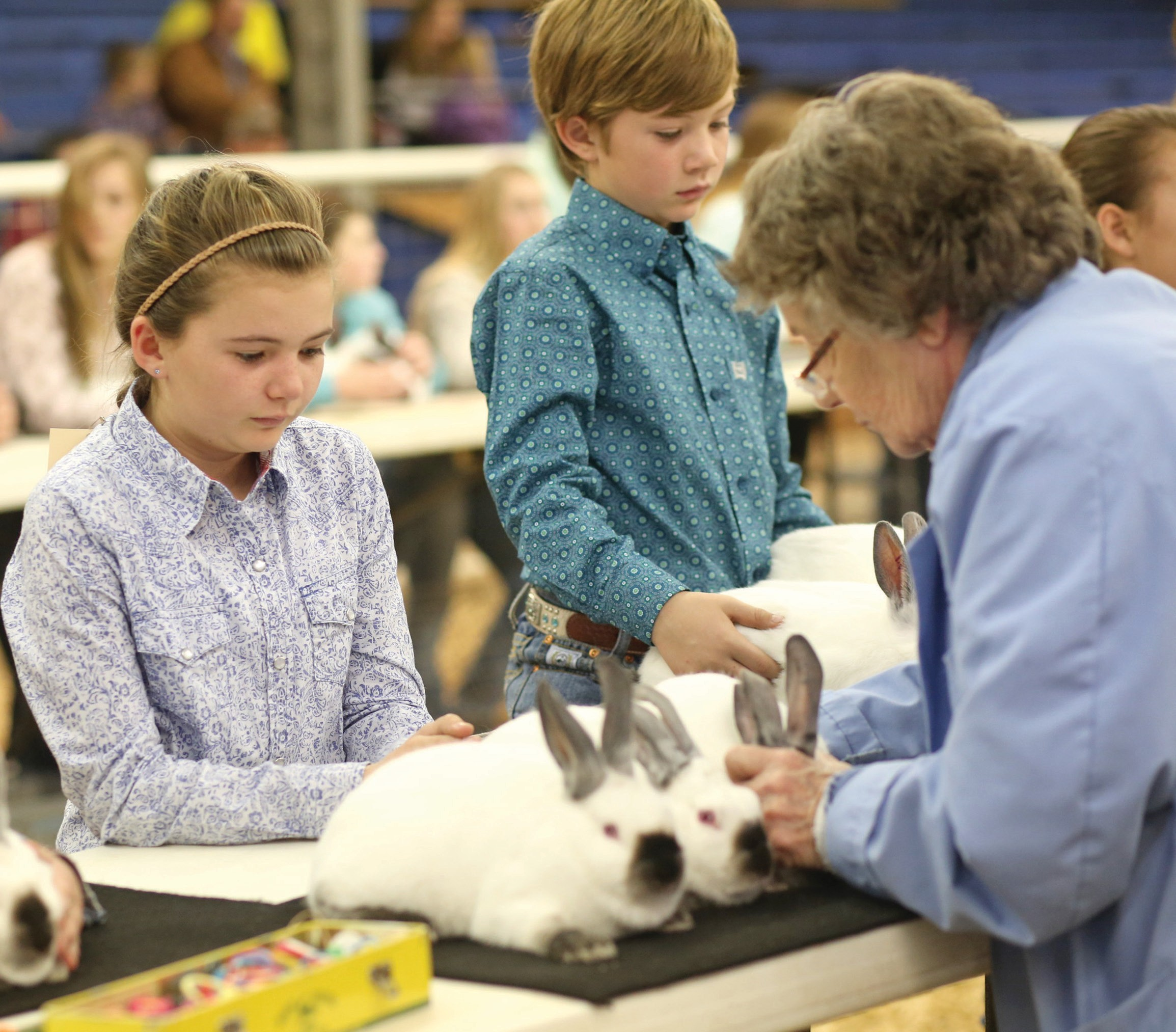 Emma and Aydan Smith both members of the Mesquite 4-H prepare for rabbit judge Dr. Amy Balzan DVM to inspect their rabbits Tuesday, Jan. 14 at the 60th annual Atascosa Live Stock Show. Emma Smith 11 years old and Aydan Smith 8 years old both attend Pleasanton ISD. Their parents are Marie and Brandon Smith of Pleasanton.