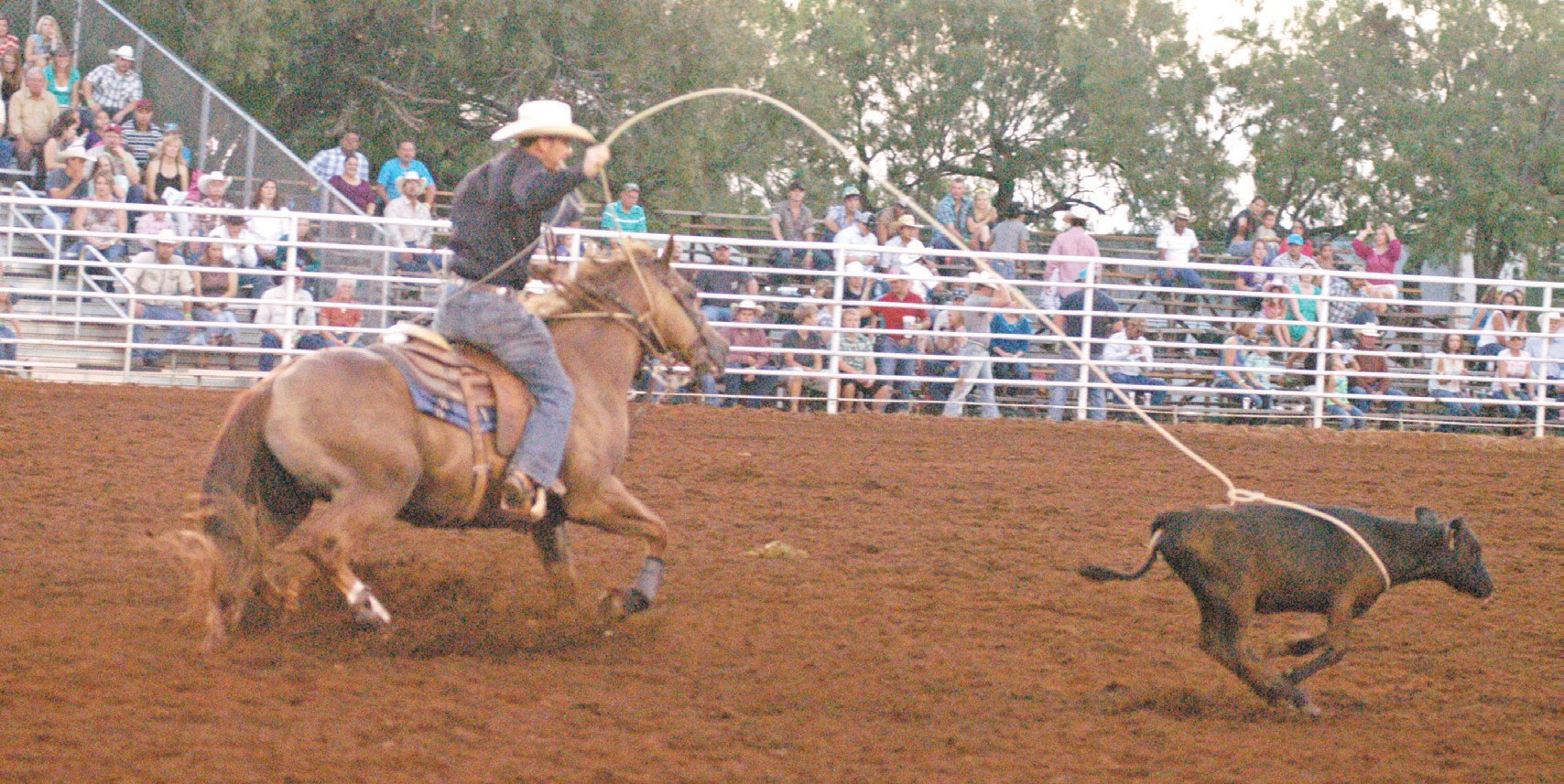Calf roping is just one of many events cowboys will compete in during the 2014 Pleasanton Young Farmers Cowboy of the Year Rodeo and Festival. It will be held Friday and Saturday, August 15 and 16 at the Atascosa County Show Barn Arena, 2209 West Oaklawn in Pleasanton.