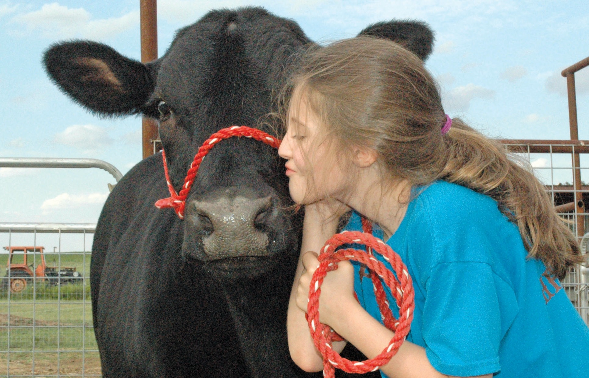 """Nine-year-old Morgan Winter and her steer """"Tiny"""" will be at the Atascosa County Fair this weekened. The prospect and home arts show are Saturday and Sunday, October 4-5. See pages 10-11C for the complete schedule. Morgan is the daughter of David and Kim Winter. The homeschooled fourth grader is a member of the Poteet 4-H."""