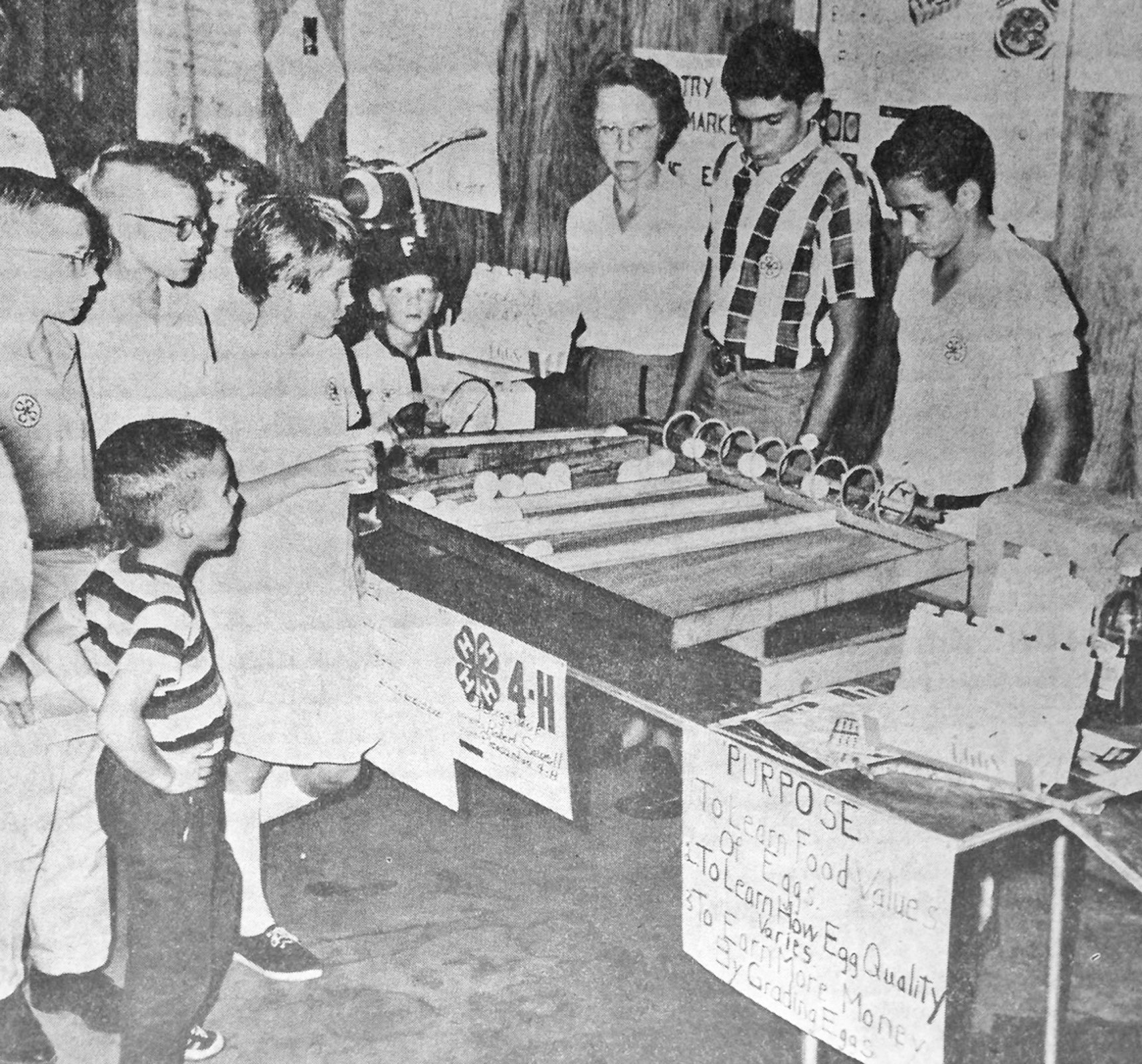 In operation-This display by two Pleasanton 4-H'ers drew considerable attention of all age groups at the 4-H Fair, Saturday. The egg grader was almost in continuous operation, grading and sizing fresh eggs by automation. Mrs. Geo Jasik (center) stands behind the grading machine demonstration set up by George Jasik Jr. and Robert Sowell, (center right and left). Express photo originally ran in the October 20, 1965 edition of the Pleasanton Express.