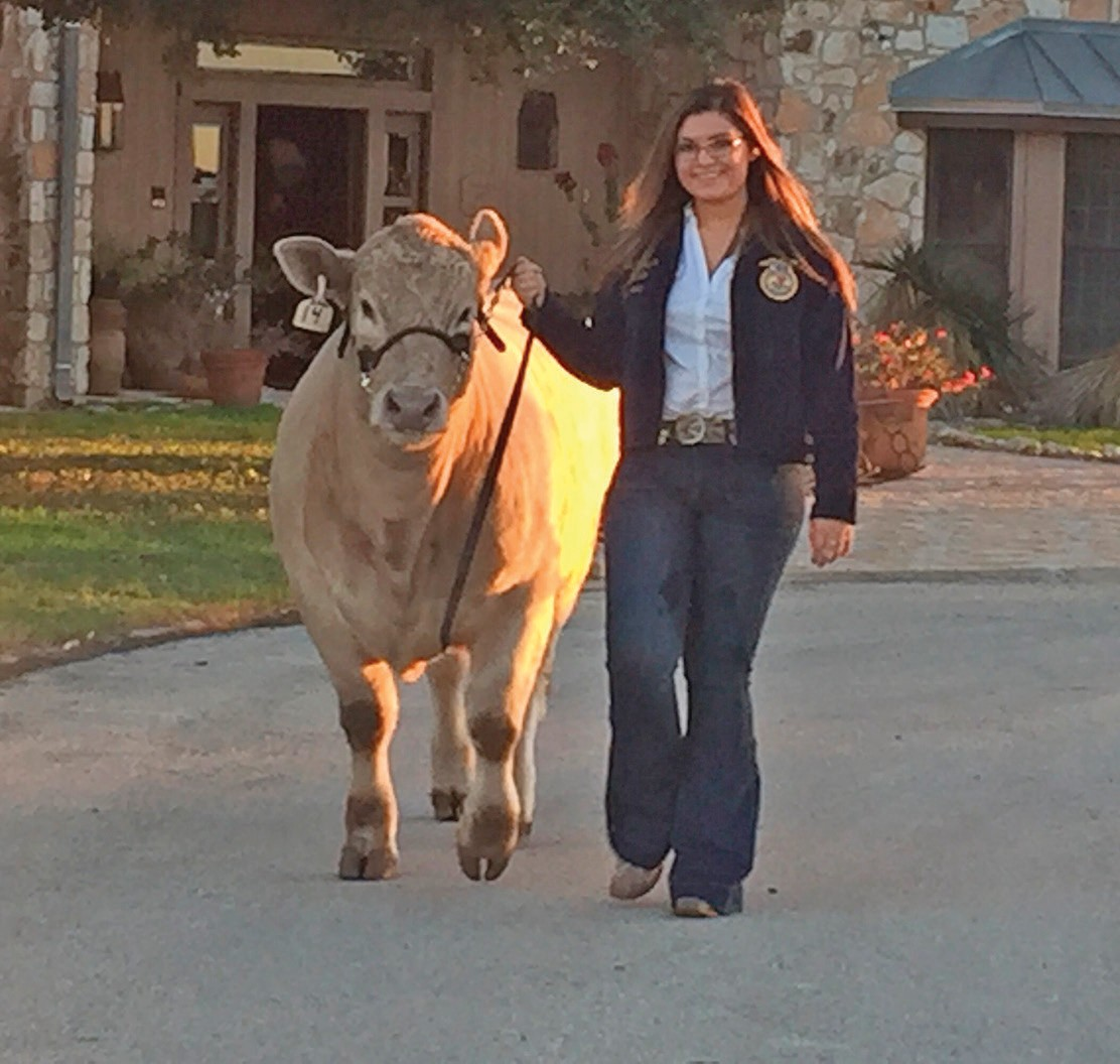 "Tilden FFA member Mirza Bazan with her steer ""Jax"". She is a junior at MCISD. Mirza is the daughter of Jose and Martha Bazan."
